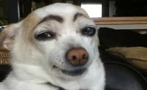 More funny eyebrows here http://www.2dayfm.com.au/scoopla/trending-now/galleries/23-hilarious-dogs-with-eyebrows/